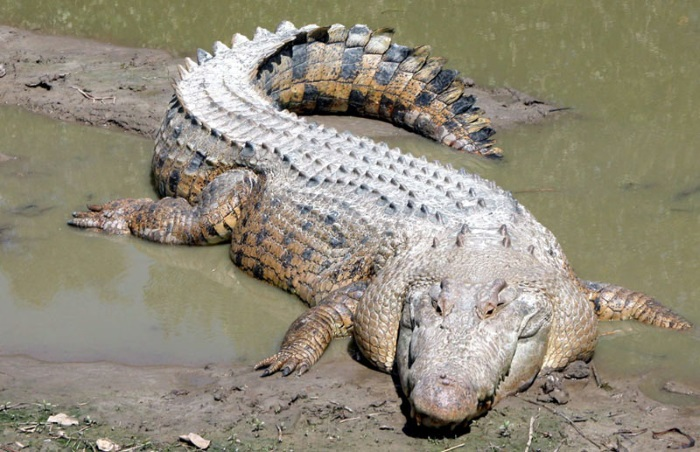 Самые большие хищники на земле. Топ-10 самых крупных на суше и в океане