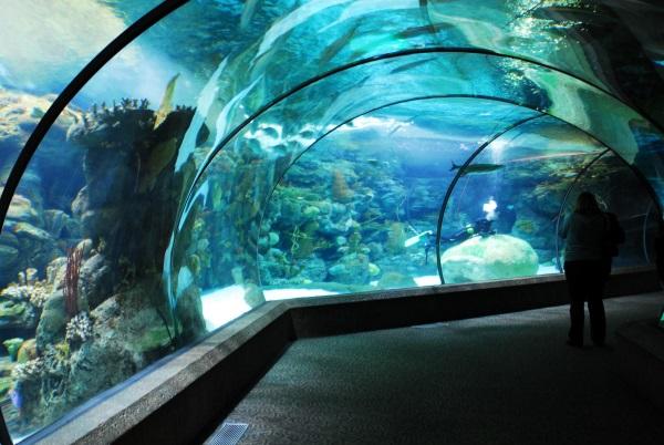 Самые большие зоопарки в мире по площади, количеству, видов животных. Где находятся, фото