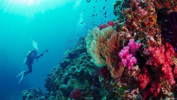 Симиланские острова, Таиланд. Фото, экскурсии, цены на отдых, отели