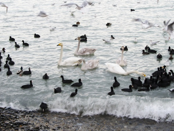 Азовское море. Где находится, глубина, соленость, фото, характеристика, города, курорты