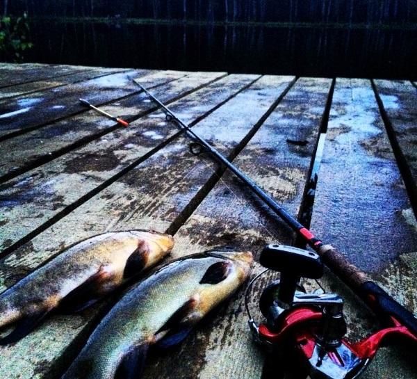Коркинские озера: база отдыха, аренда беседок, веревочный парк, пейнтбол, рыбалка, грибы. Как доехать, карта, фото