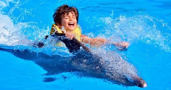 Где поплавать с дельфинами в Санкт-Петербурге. Адреса, цены, купоны