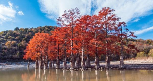 Сукко кипарисовое озеро. Фото, месторасположение, как доехать, где на карте, интересные факты