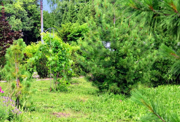 Чебоксарский ботанический сад, Чебоксары. Фото, каталог растений, как доехать