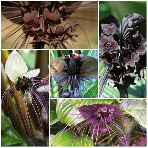 Самые редкие цветы в мире необычные, сказочные. Фото