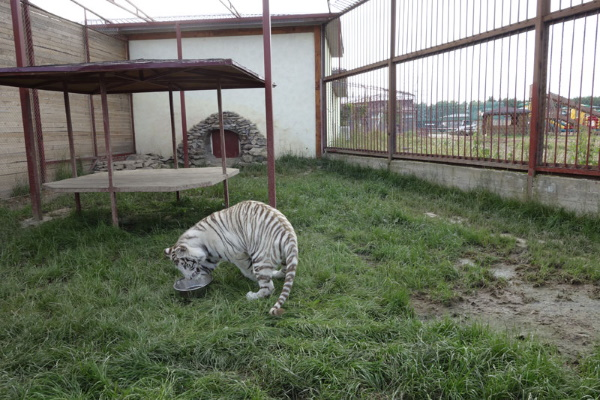 Экзотик парк - зоопарк на Калужское шоссе в Подмосковье. Отзывы, фото, цены