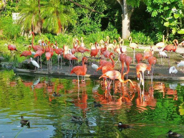 Майами, Флорида, США. Достопримечательности, фото, куда сходить, что посмотреть за один день