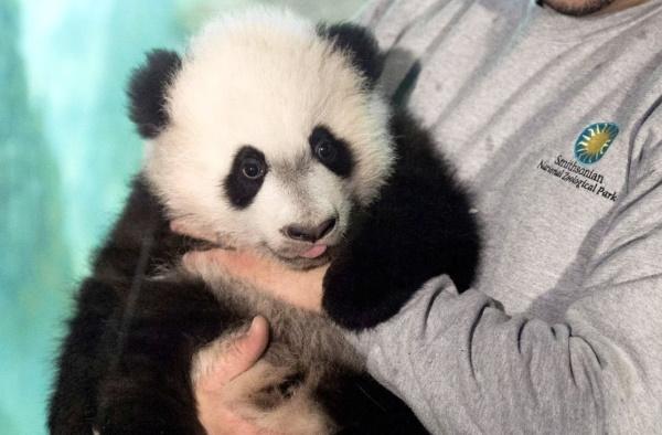 Заповедник панд в Китае. Как добраться из Пекина, где находится, экскурсии, фото, видео