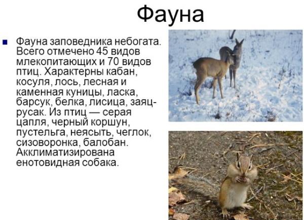 Заповедник Столбы в Красноярске. Фото, карта маршрутов, экскурсии, как добраться