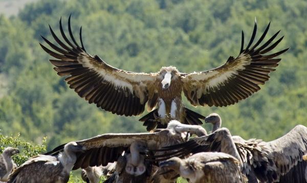 Заповедники Краснодарского края, национальные парки. Список, названия, описание
