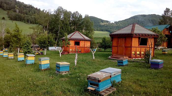 Бирюзовая Катунь, Горный Алтай. Цены, фото, карта