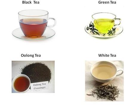 Чайные плантации, Шри-Ланка: Нувара Элия, Канди, Унаватуна, Цейлон. Фото, экскурсии