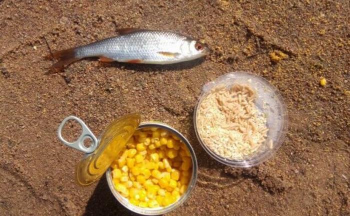 Копанское озеро базы отдыха, рыбалка. Фото, цены
