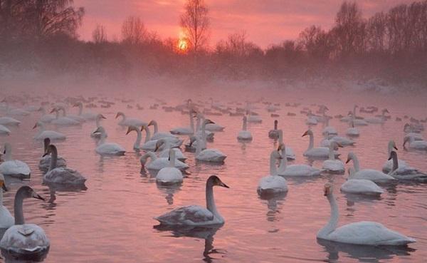 Лебединое озеро на Алтае. Где находится, остановиться, как доехать, фото