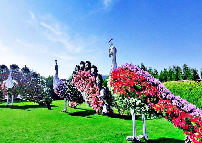 Миракл Гарден в Дубае (Dubai Miracle Garden). График работы, цена, фото