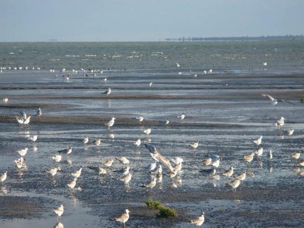 Самые соленые озера в России, где лечат суставы, псориаз, для отдыха