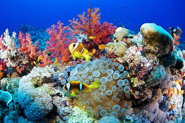 Красное море, Египет. Фото пляжа, под водой
